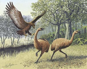 Giant Moa of New Zealand